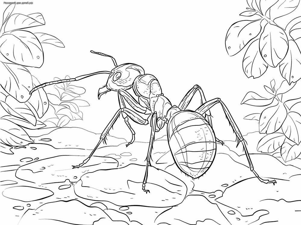 Раскраски муравьи