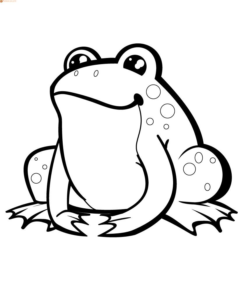 Раскраски лягушка для детей