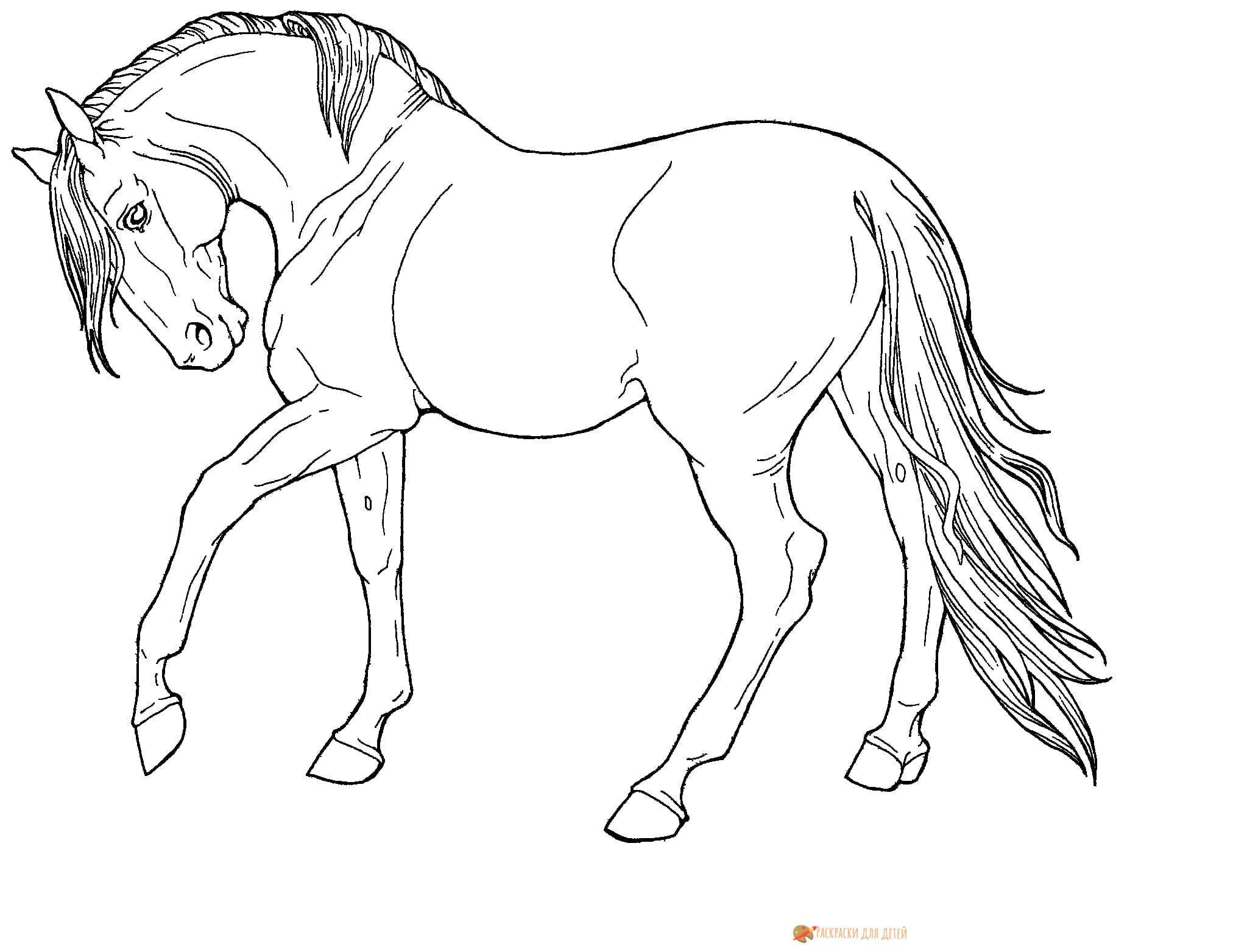Раскраски красивых лошадей